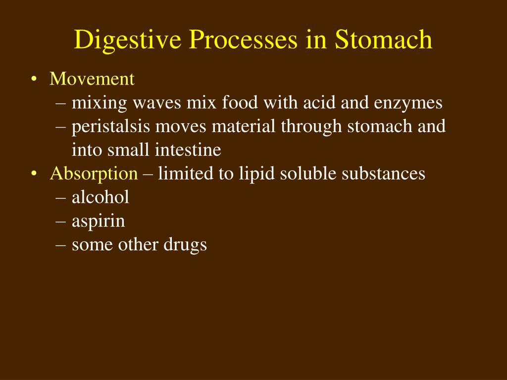 Digestive Processes in Stomach