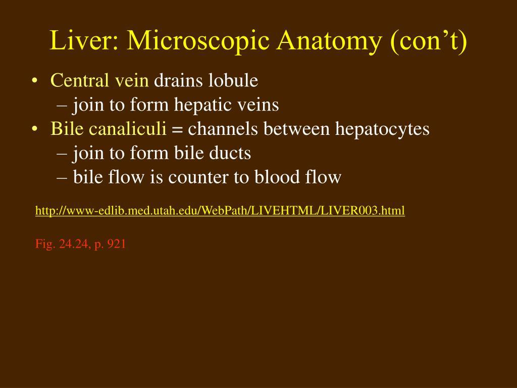 Liver: Microscopic Anatomy (con't)