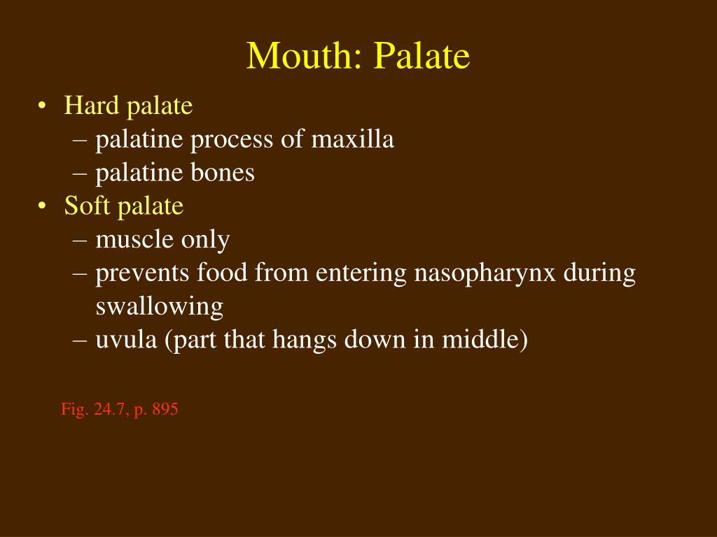 Mouth: Palate