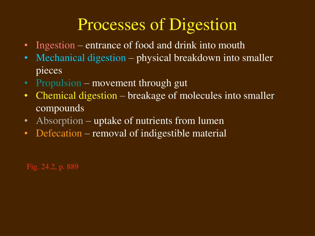 Processes of Digestion