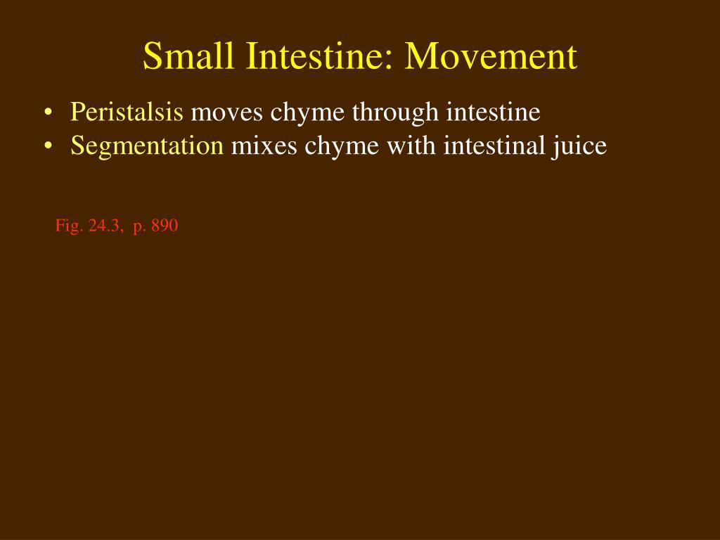 Small Intestine: Movement
