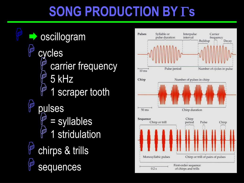 SONG PRODUCTION BY
