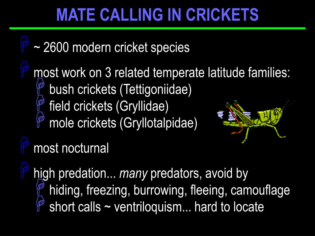 MATE CALLING IN CRICKETS