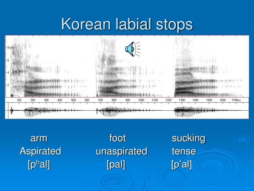 Korean labial stops