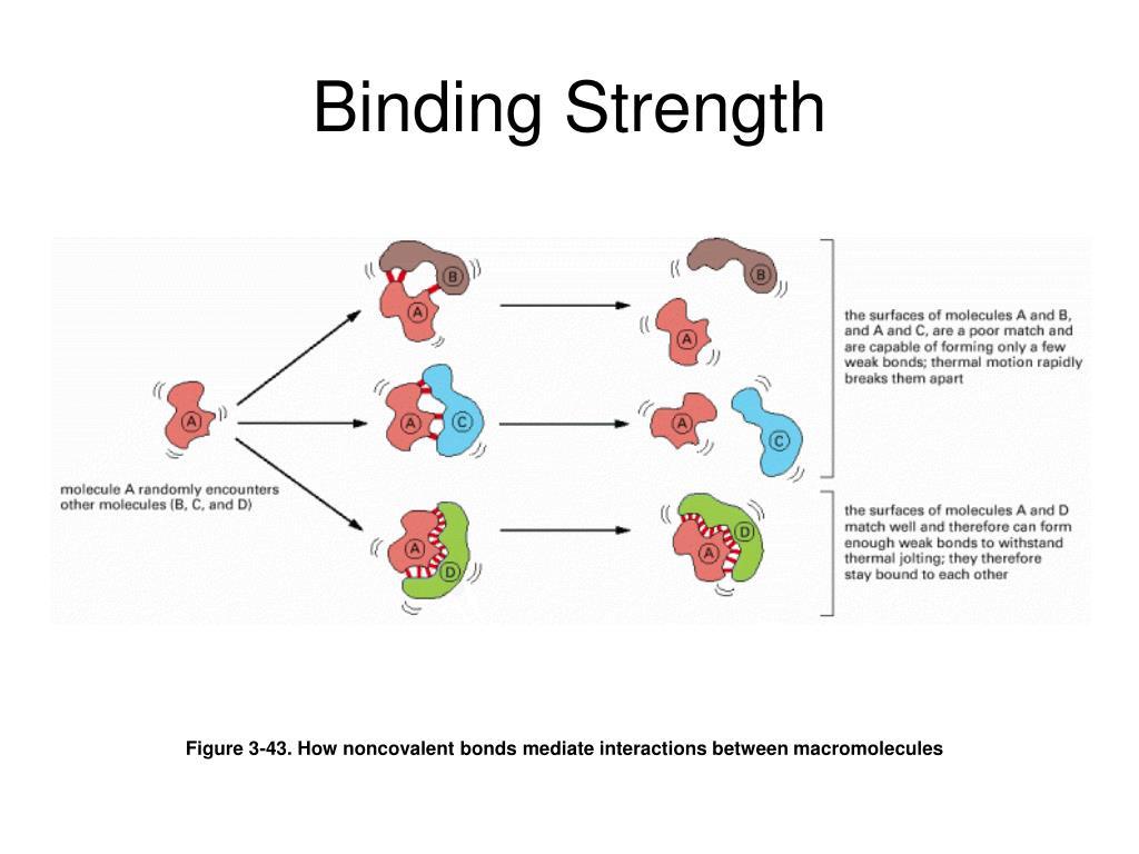 Binding Strength