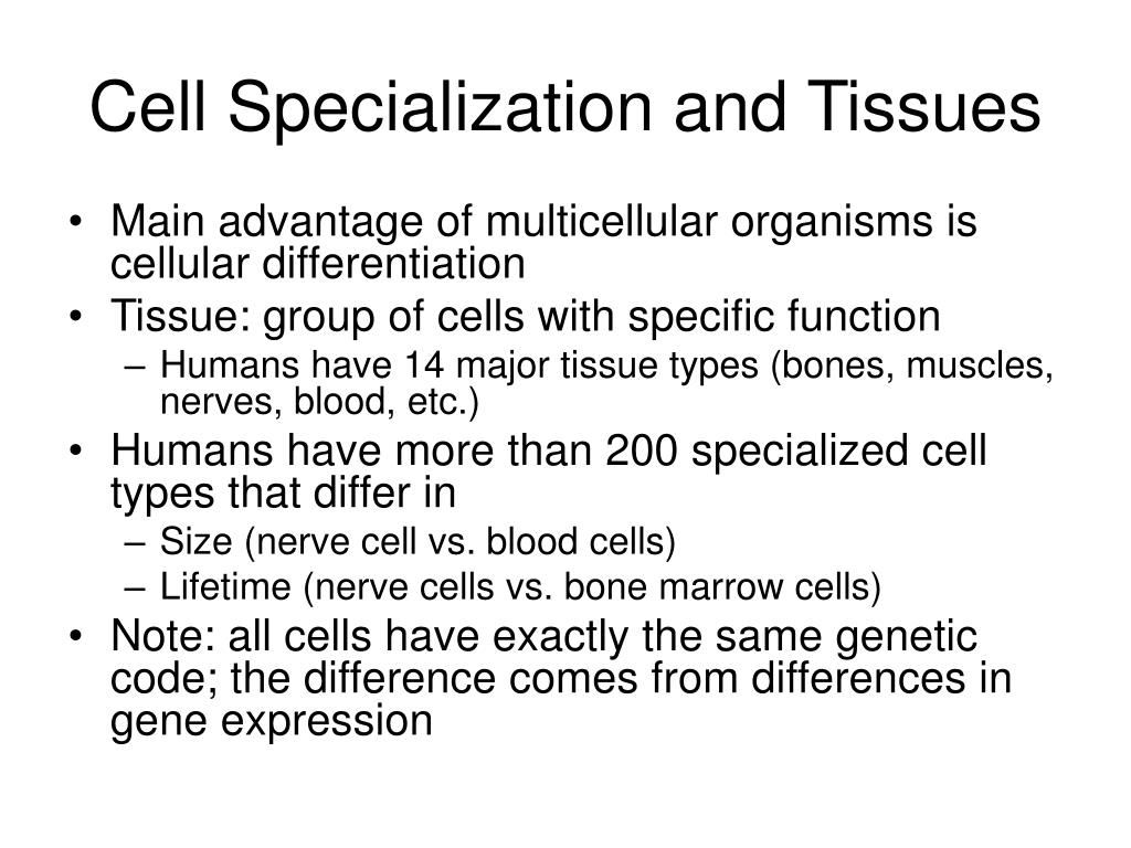 Cell Specialization and Tissues