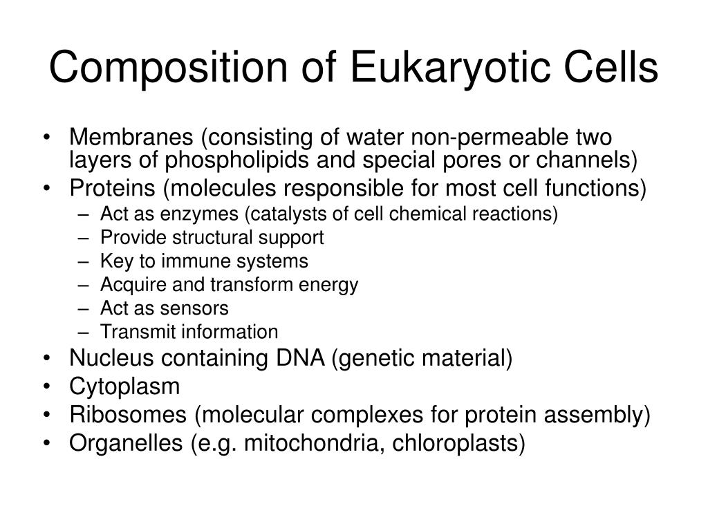Composition of Eukaryotic Cells