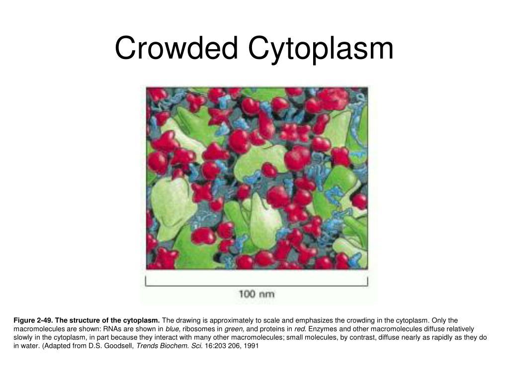 Crowded Cytoplasm