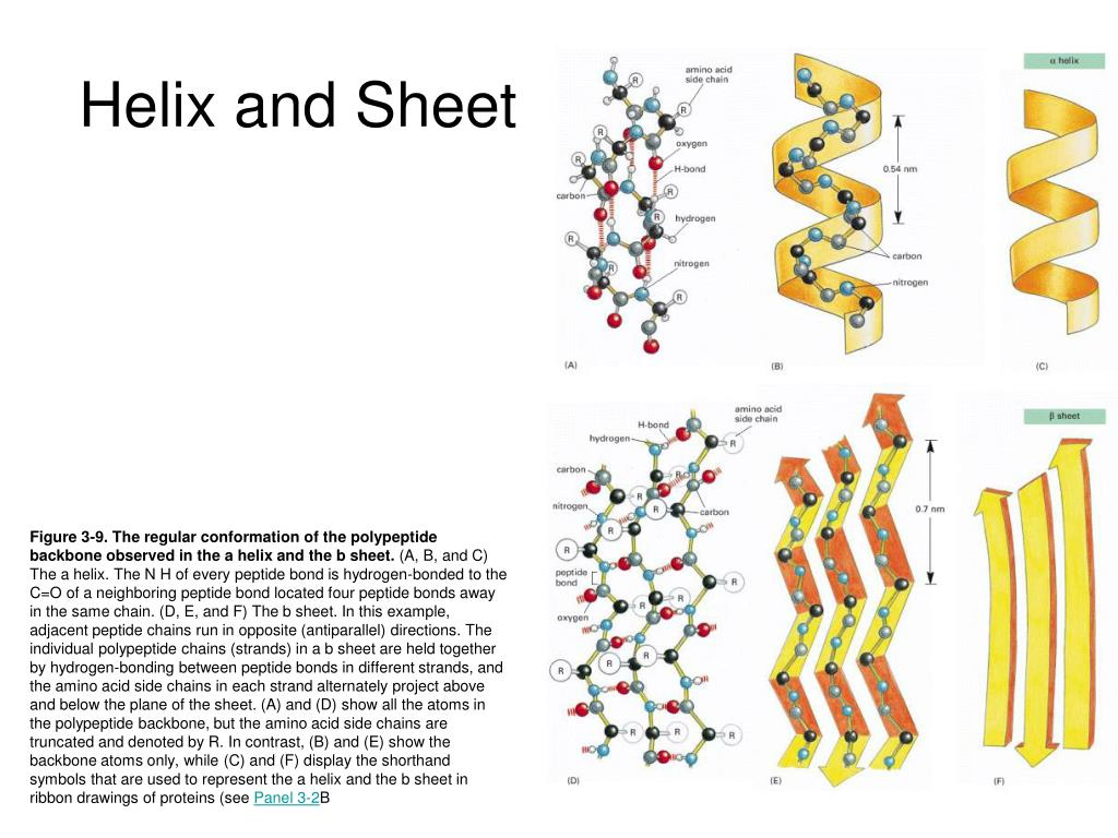 Helix and Sheet
