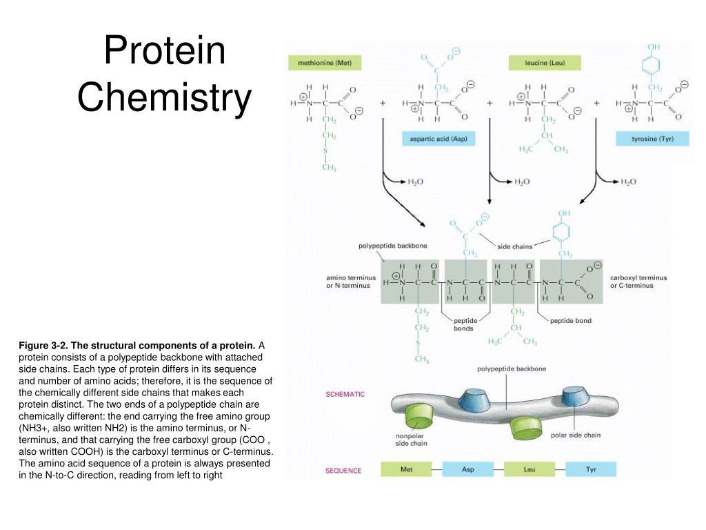 Protein Chemistry