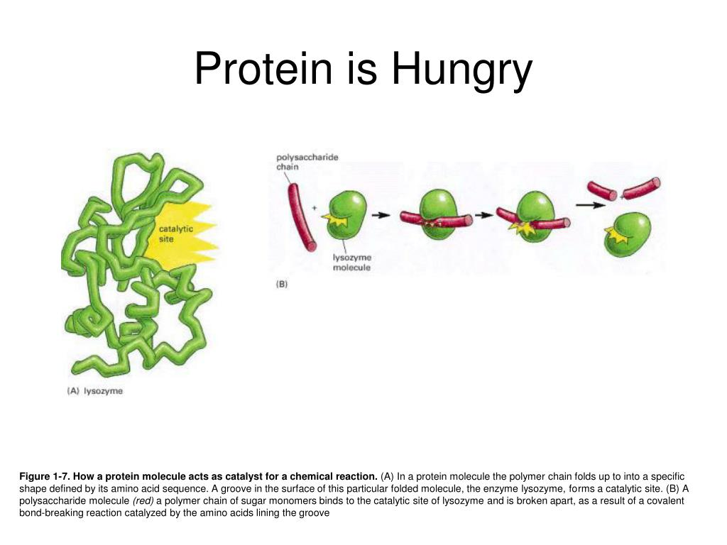 Protein is Hungry