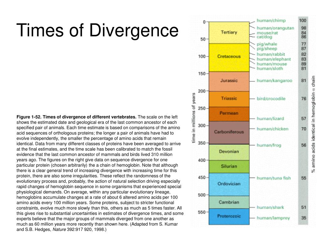 Times of Divergence