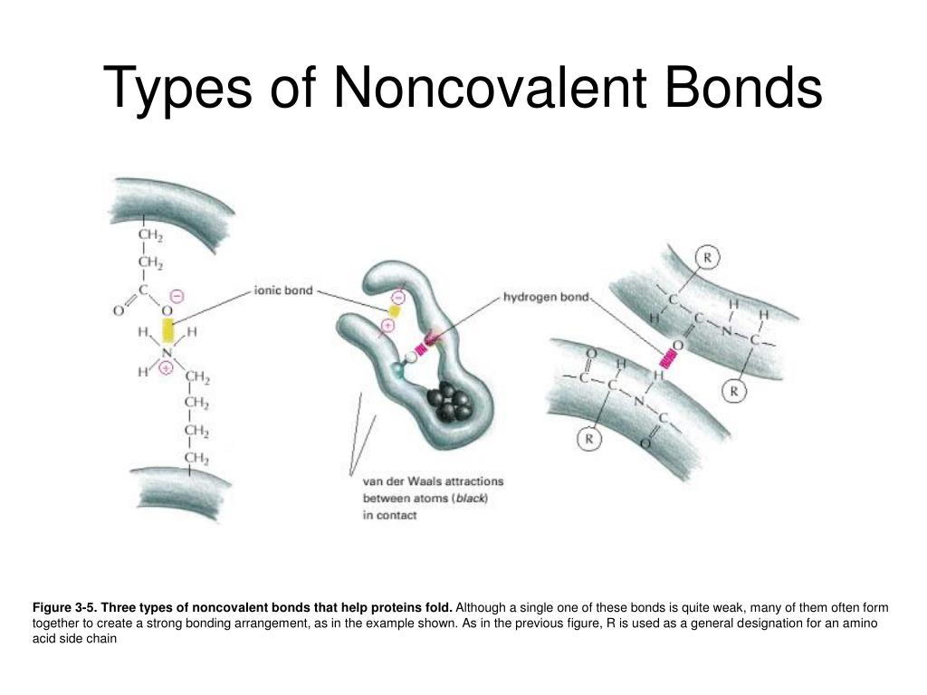 Types of Noncovalent Bonds
