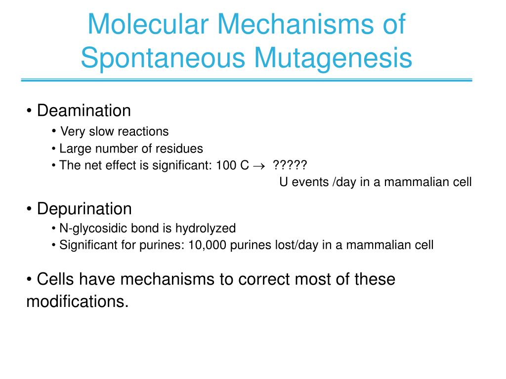 Molecular Mechanisms of Spontaneous Mutagenesis
