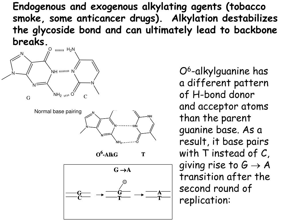 Endogenous and exogenous alkylating agents (tobacco smoke, some anticancer drugs).  Alkylation destabilizes the glycoside bond and can ultimately lead to backbone breaks.