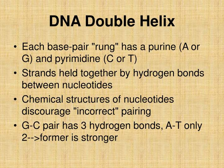 Dna double helix3