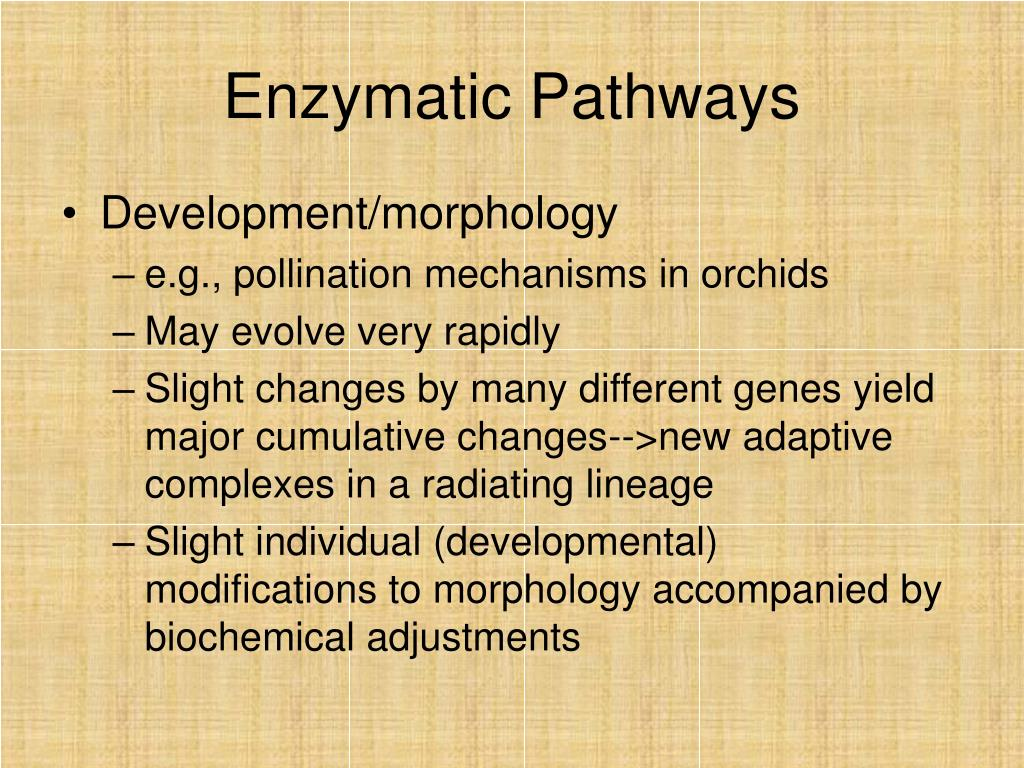 Enzymatic Pathways