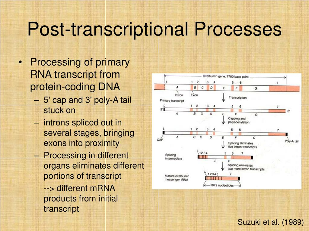 Post-transcriptional Processes