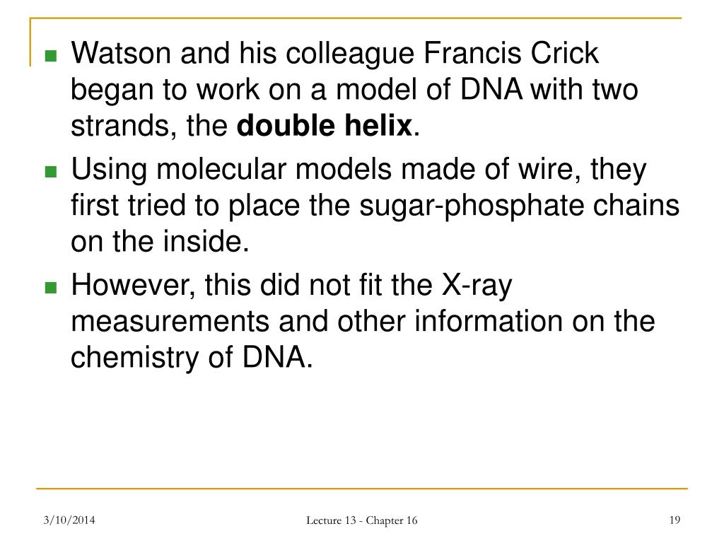 Watson and his colleague Francis Crick began to work on a model of DNA with two strands, the