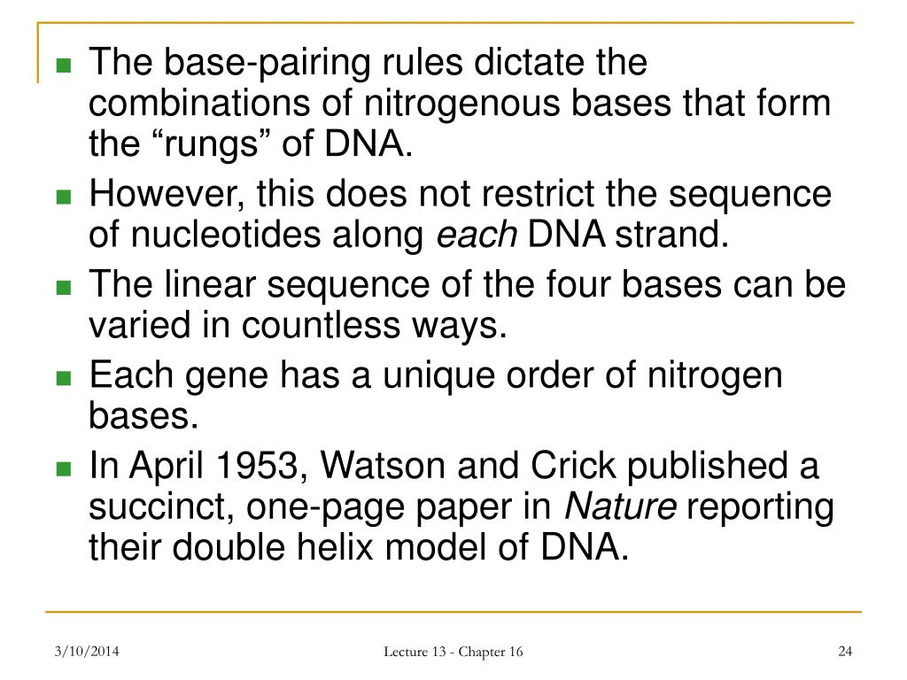 "The base-pairing rules dictate the combinations of nitrogenous bases that form the ""rungs"" of DNA."
