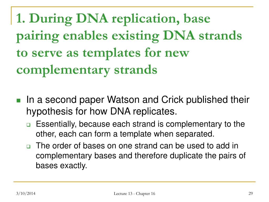 1. During DNA replication, base pairing enables existing DNA strands to serve as templates for new complementary strands