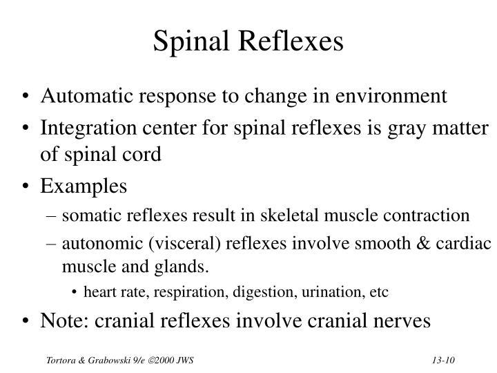 Spinal Reflexes