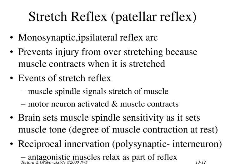 Stretch Reflex (patellar reflex)