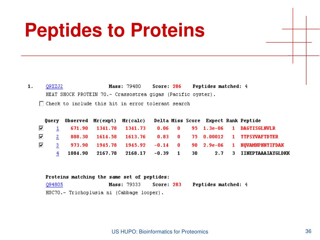 Peptides to Proteins