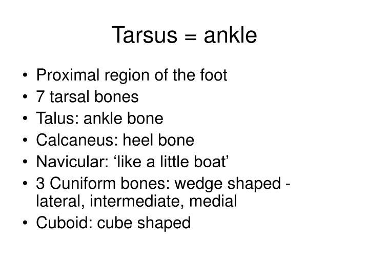 Tarsus = ankle