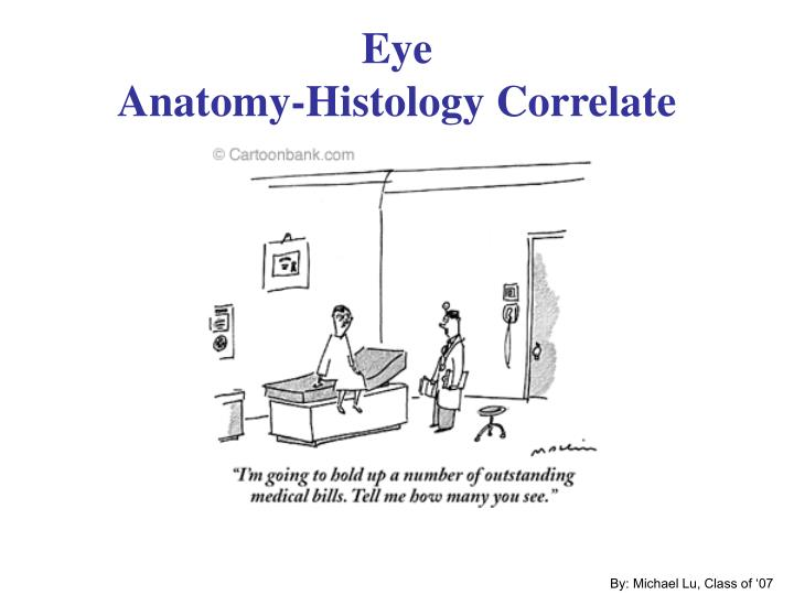 Eye anatomy histology correlate