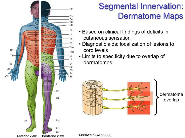 Segmental Innervation: