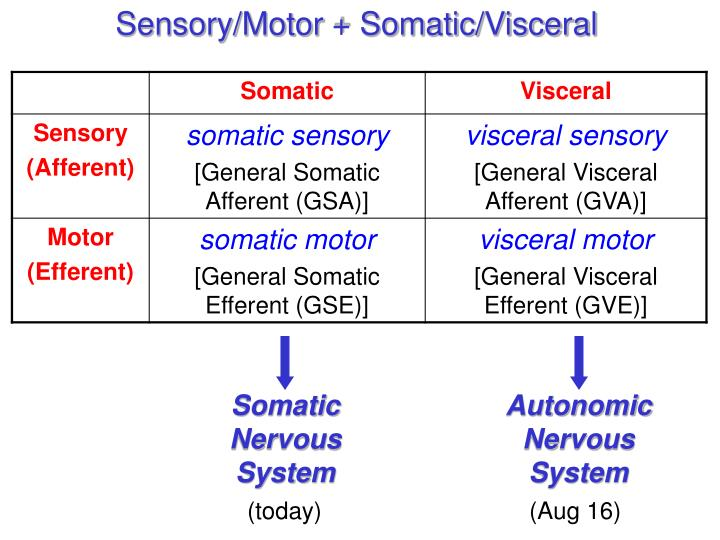 Sensory/Motor + Somatic/Visceral