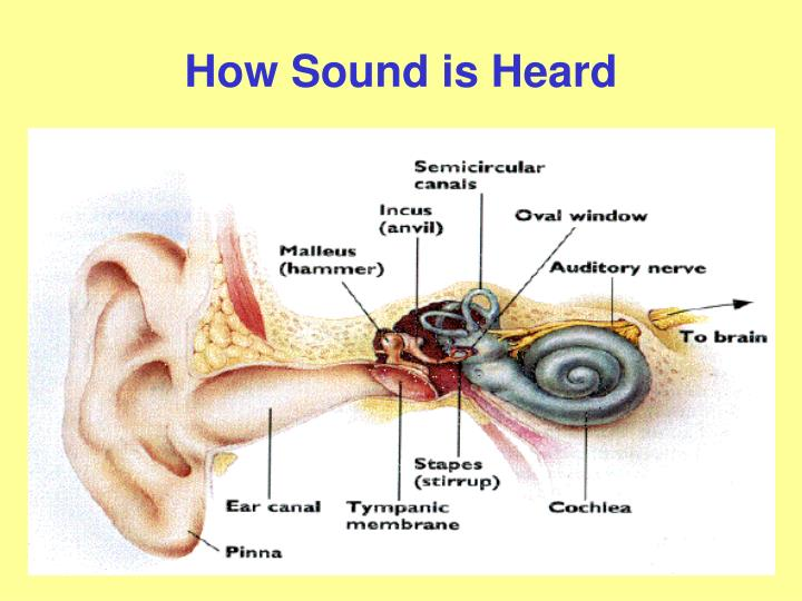 How Sound is Heard