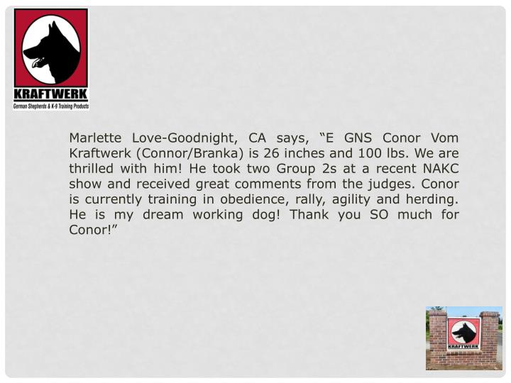 "Marlette Love-Goodnight, CA says, ""E GNS Conor Vom Kraftwerk (Connor/Branka) is 26 inches and 100 ..."
