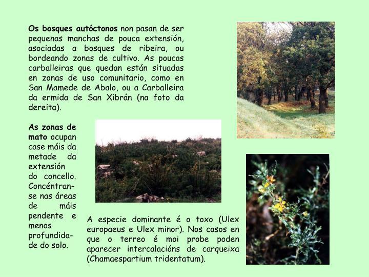 Os bosques autctonos