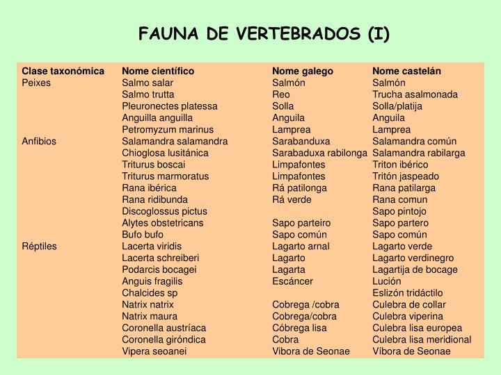 FAUNA DE VERTEBRADOS (I)