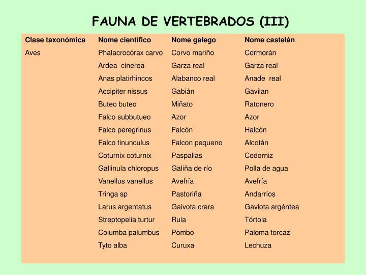 FAUNA DE VERTEBRADOS (III)