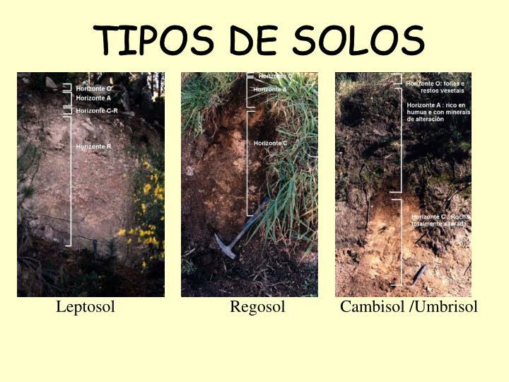 TIPOS DE SOLOS