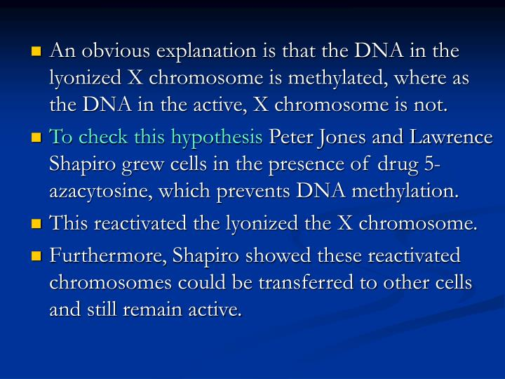 An obvious explanation is that the DNA in the lyonized X chromosome is methylated, where as the DNA in the active, X chromosome is not.