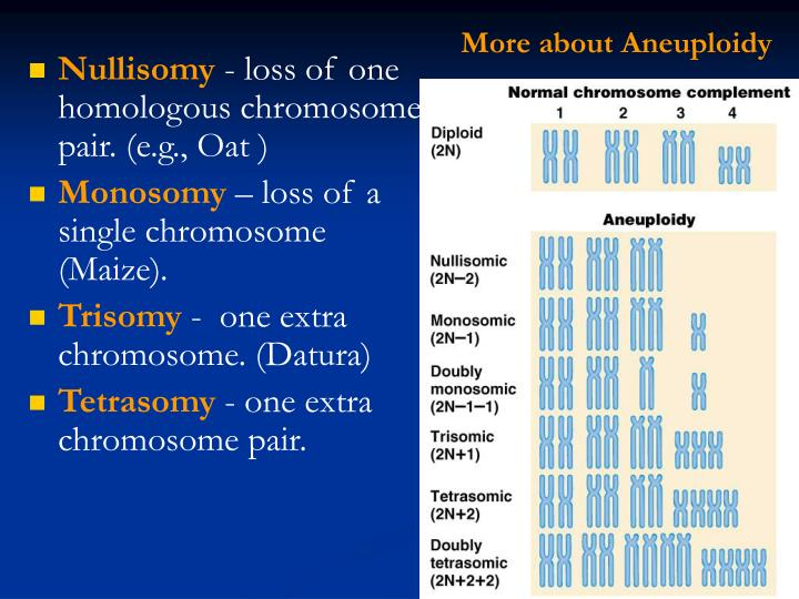 More about Aneuploidy