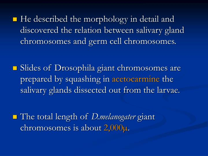 He described the morphology in detail and discovered the relation between salivary gland chromosomes and germ cell chromosomes.