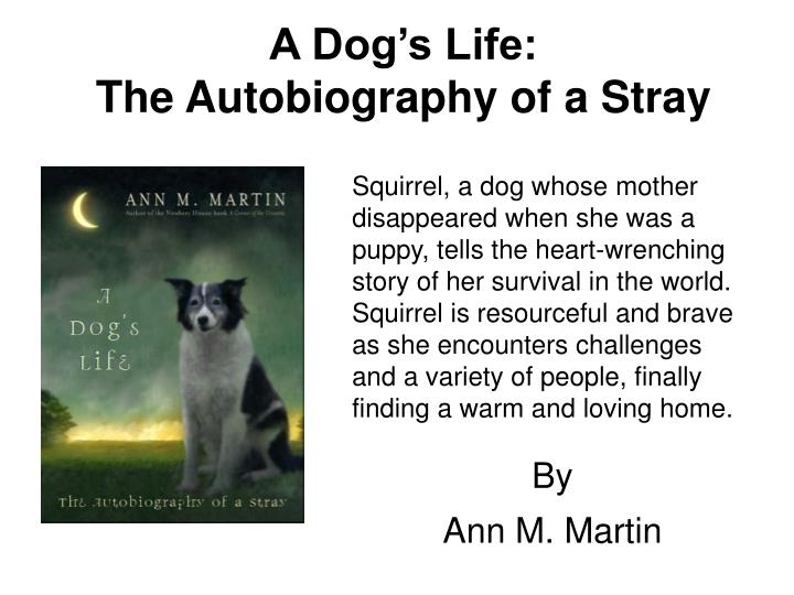 A dog s life the autobiography of a stray