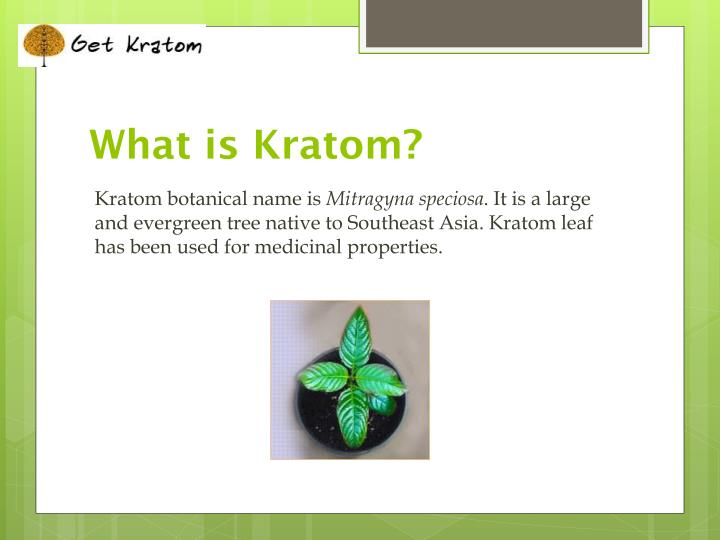 What is kratom l.jpg