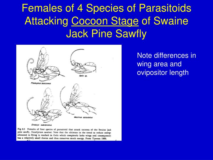 Females of 4 Species of Parasitoids Attacking