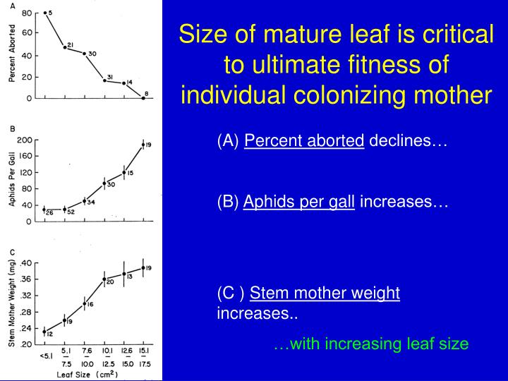 Size of mature leaf is critical to ultimate fitness of individual colonizing mother