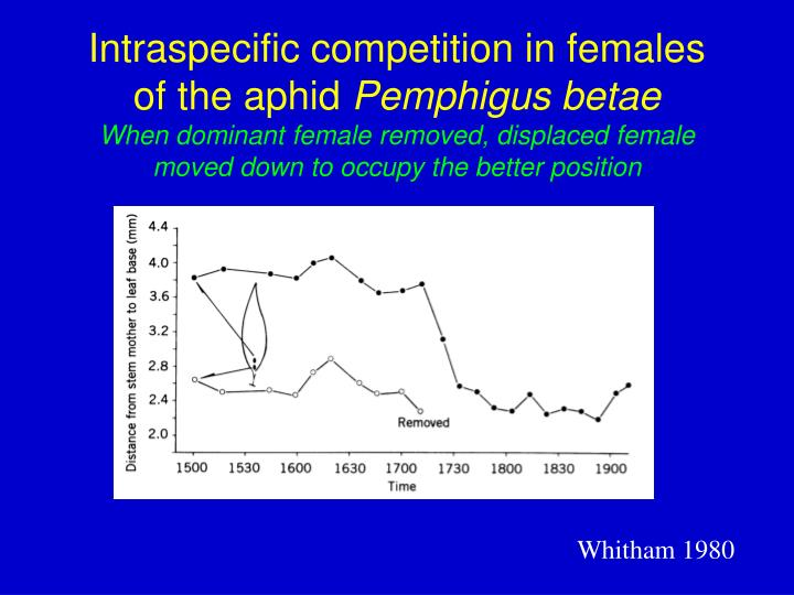 Intraspecific competition in females of the aphid