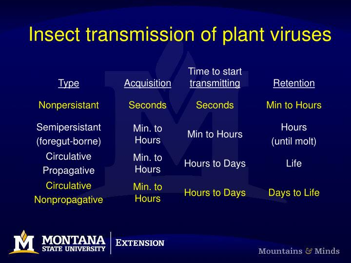 Insect transmission of plant viruses