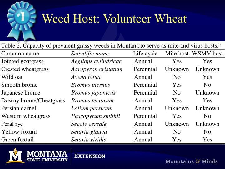 Weed Host: Volunteer Wheat