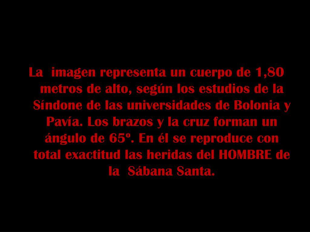 La  imagen representa un cuerpo de 1,80 metros de alto, según los estudios de la Síndone de las universidades de Bolonia y Pavía. Los brazos y la cruz forman un ángulo de 65º. En él se reproduce con total exactitud las heridas del HOMBRE de la  Sábana Santa.