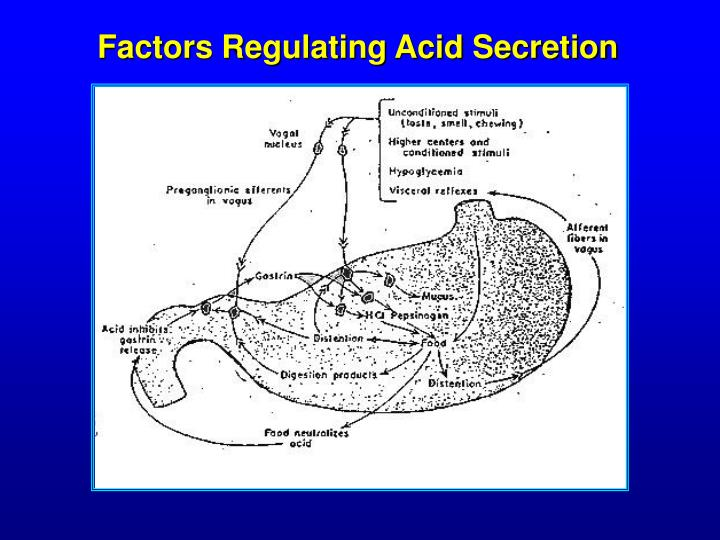 Factors Regulating Acid Secretion